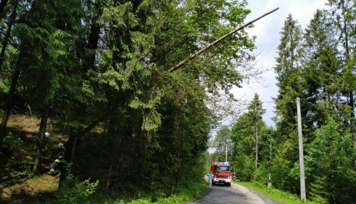 14# Niebezpiecznie pochylone drzewo